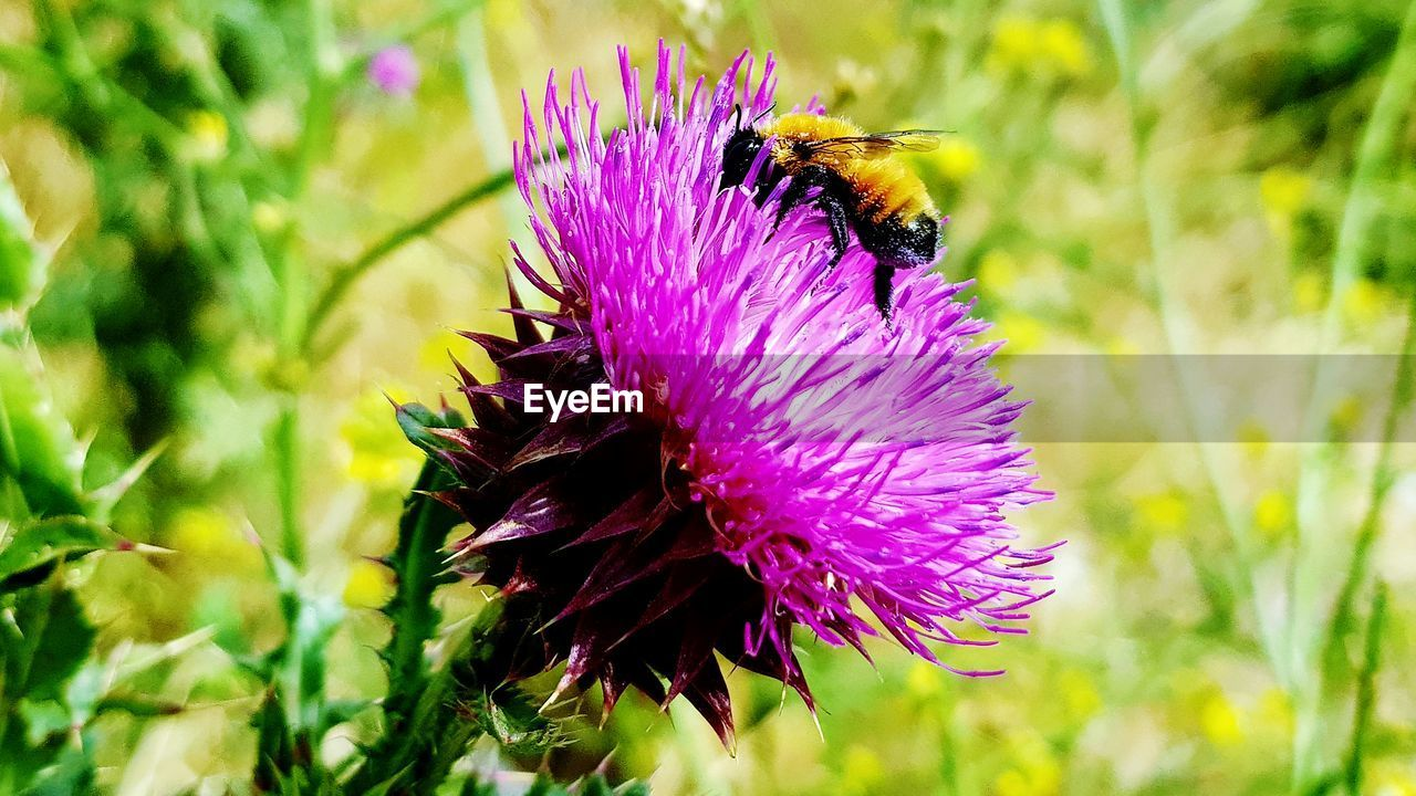 flower, flowering plant, animal, animal themes, animal wildlife, animals in the wild, plant, one animal, invertebrate, insect, beauty in nature, bee, growth, freshness, fragility, close-up, vulnerability, petal, flower head, focus on foreground, bumblebee, pollination, no people, purple