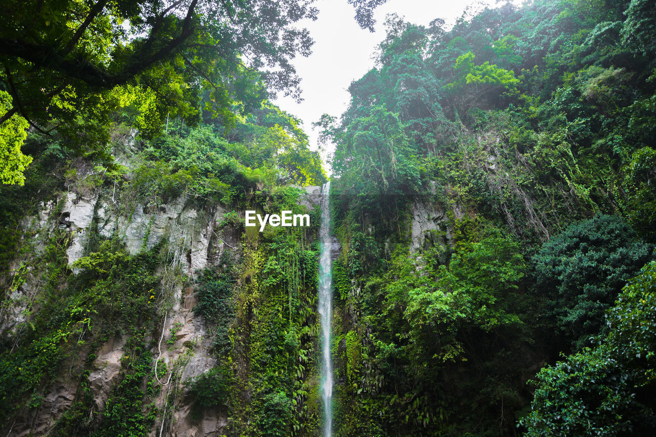 plant, tree, forest, land, beauty in nature, scenics - nature, green color, growth, nature, no people, non-urban scene, foliage, lush foliage, tranquility, day, rainforest, waterfall, outdoors, environment, water, flowing water, formation