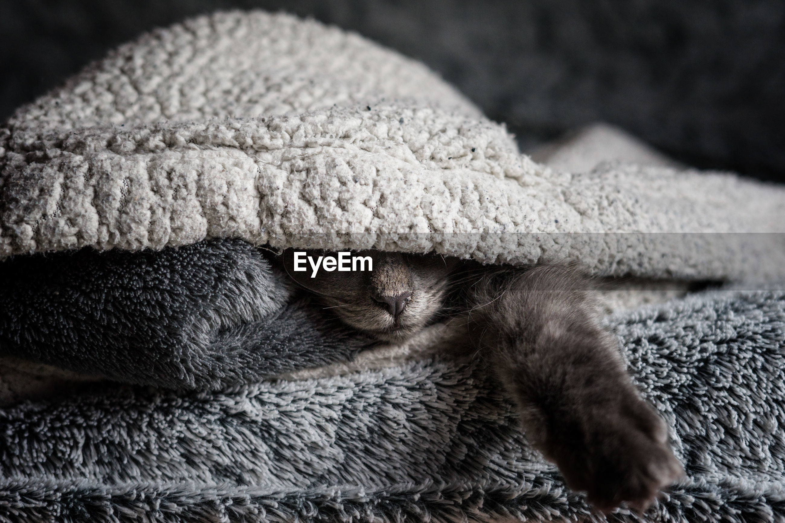 Close-up of a cat resting under blanket