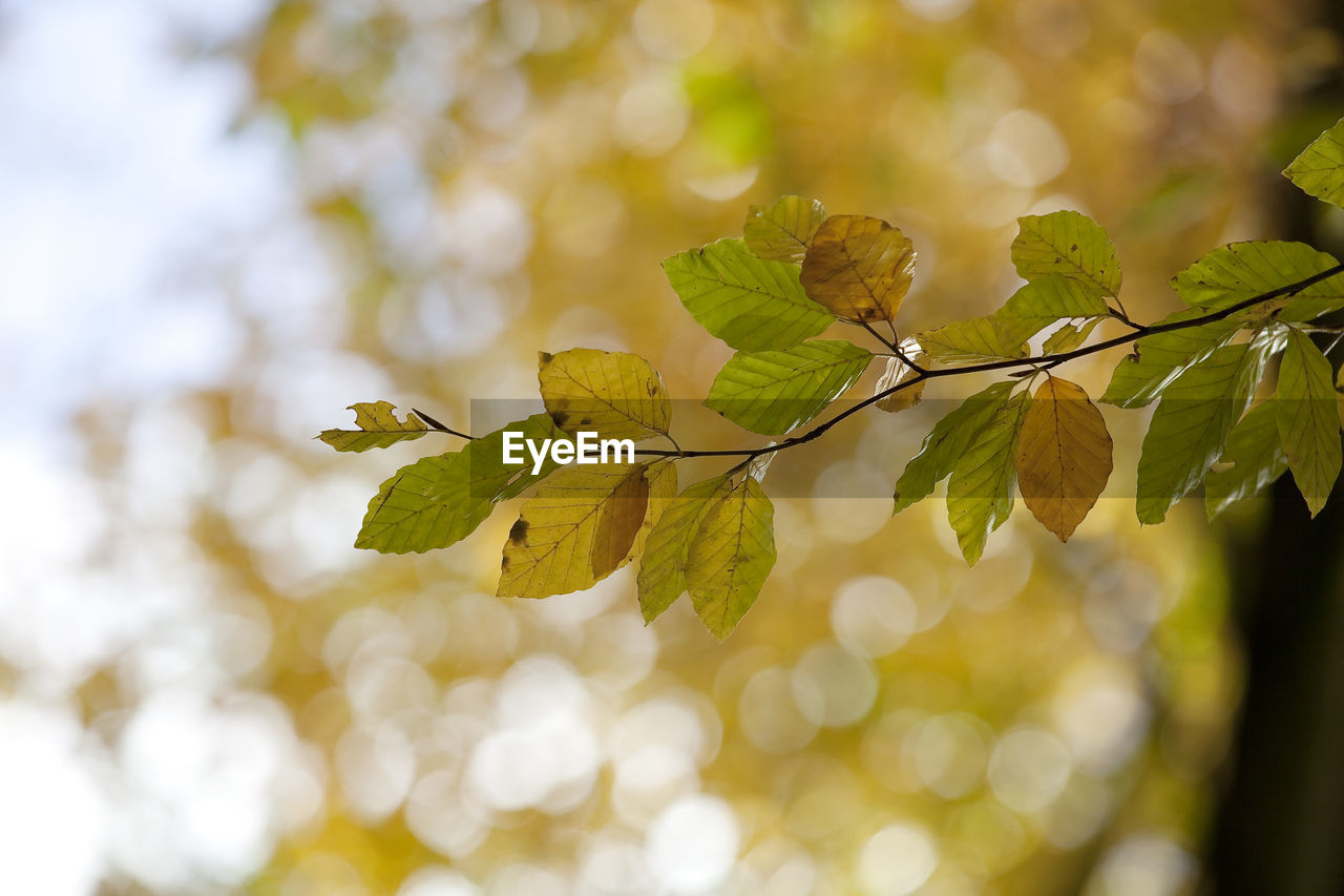 plant, leaf, plant part, growth, beauty in nature, close-up, focus on foreground, day, tree, no people, nature, selective focus, green color, tranquility, vulnerability, outdoors, freshness, fragility, branch, twig, leaves