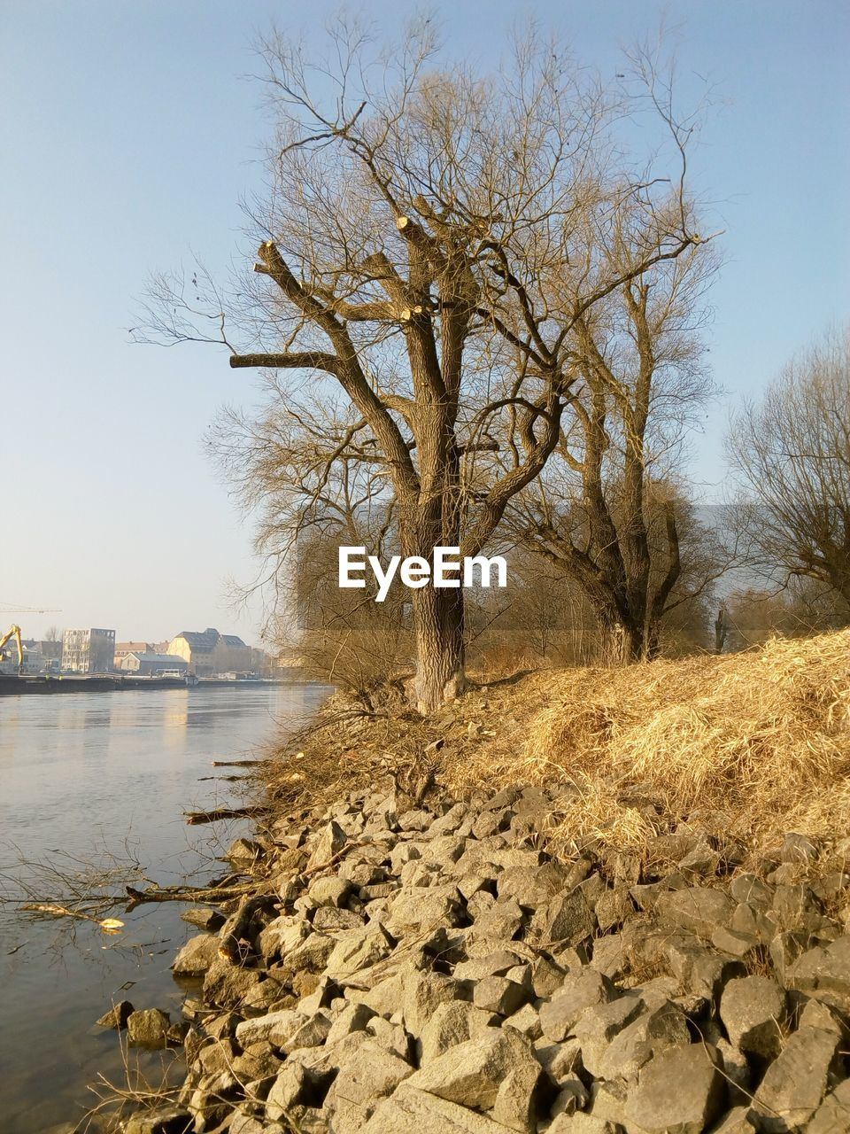 bare tree, tree, branch, water, nature, lone, day, outdoors, river, no people, sky, tranquility, built structure, beauty in nature, landscape, clear sky, architecture