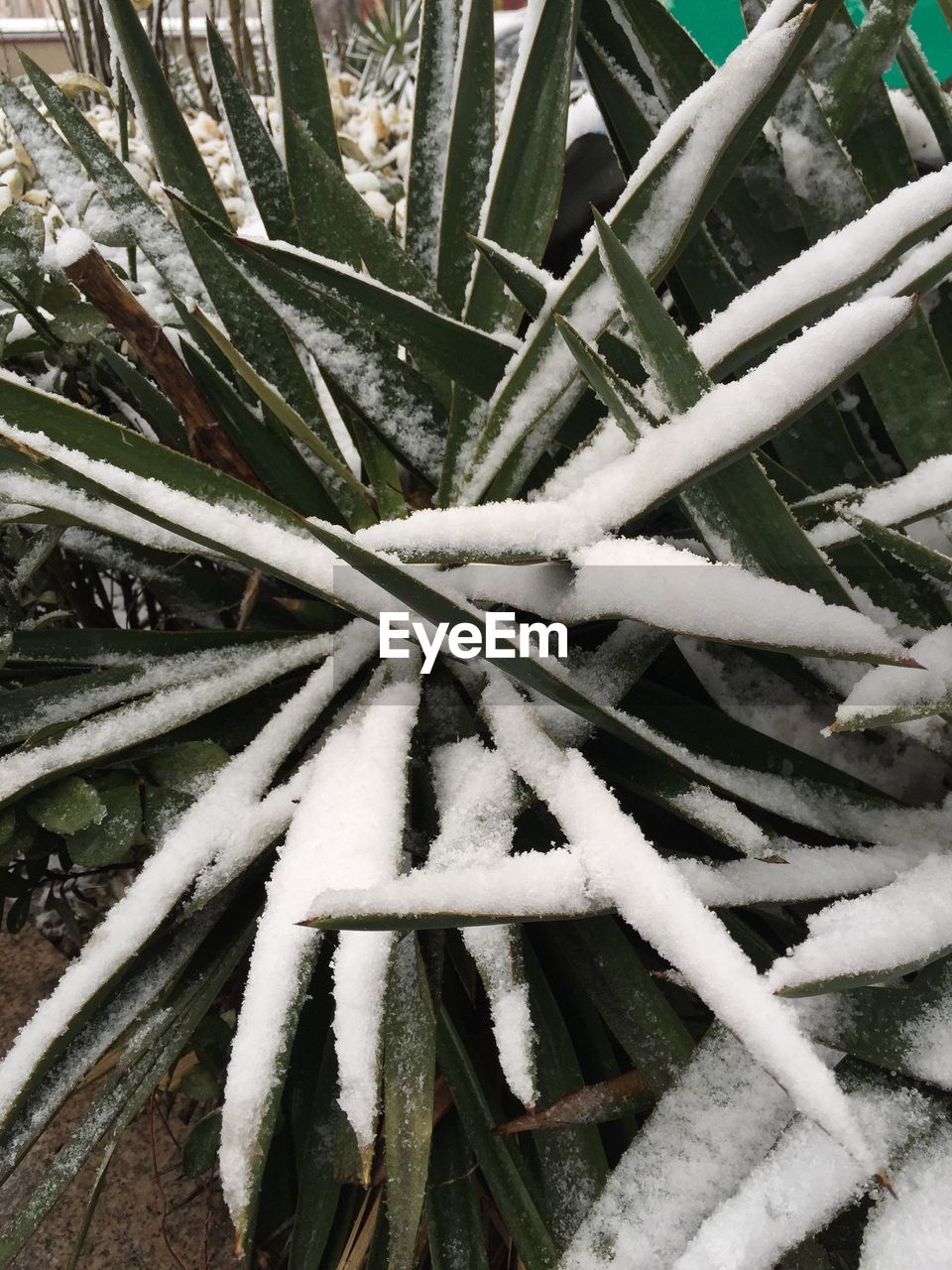 plant, outdoors, close-up, day, growth, leaf, no people, bamboo - plant, nature, cold temperature