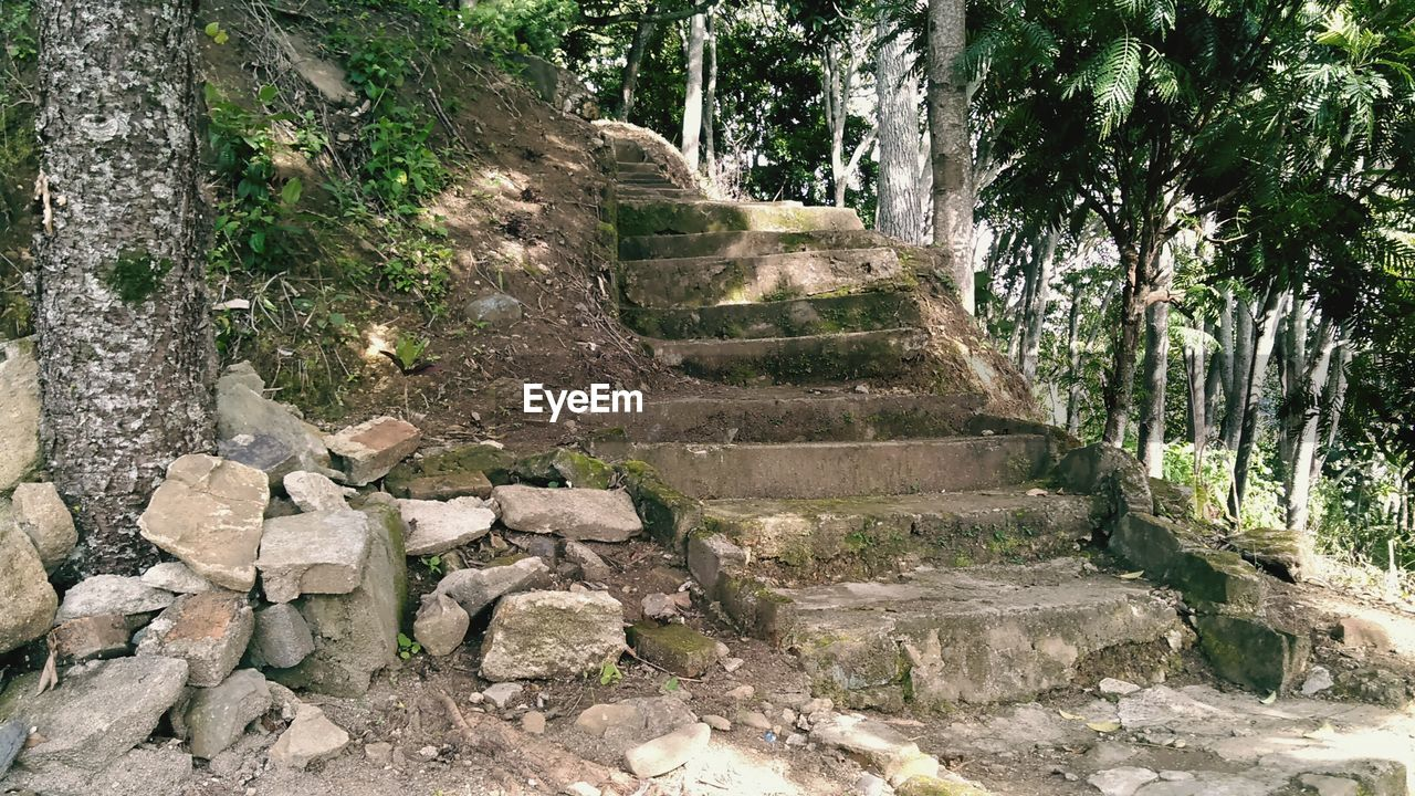 steps, steps and staircases, tree, day, nature, no people, outdoors, architecture, ancient civilization