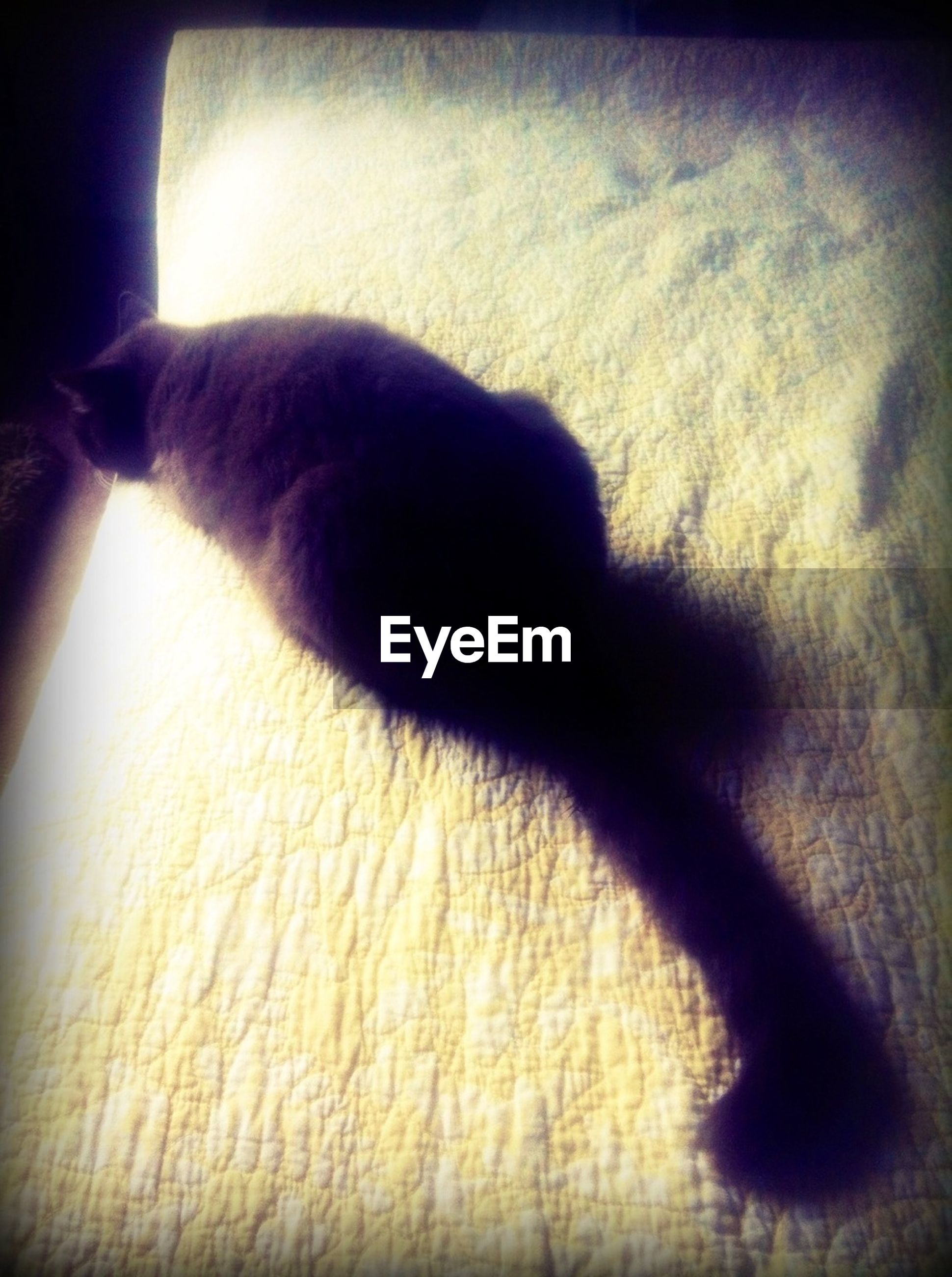 indoors, shadow, sunlight, close-up, part of, auto post production filter, high angle view, low section, unrecognizable person, home interior, person, side view, domestic animals, vignette, relaxation, selective focus
