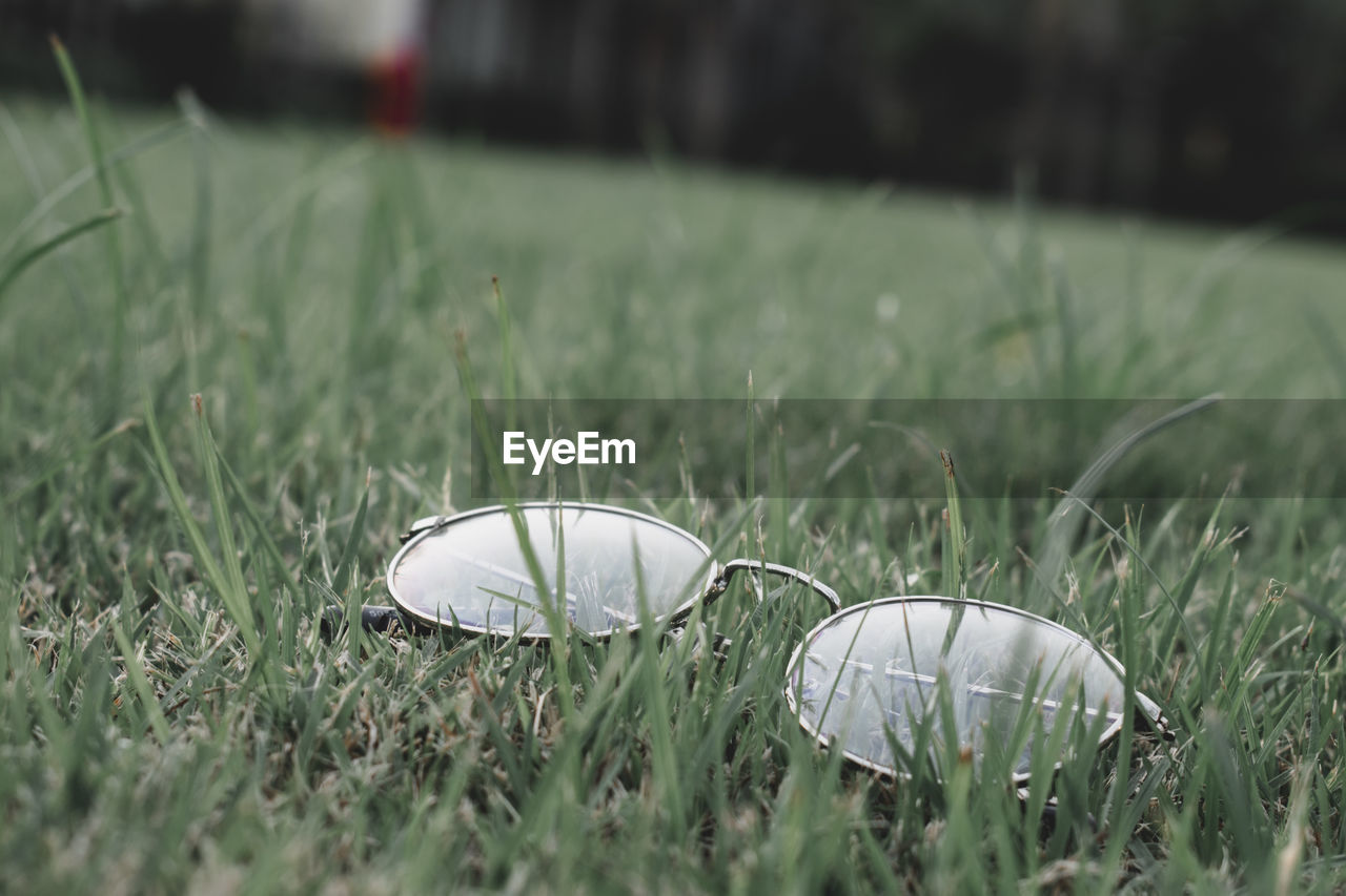 CLOSE-UP OF SHELLS ON GRASS