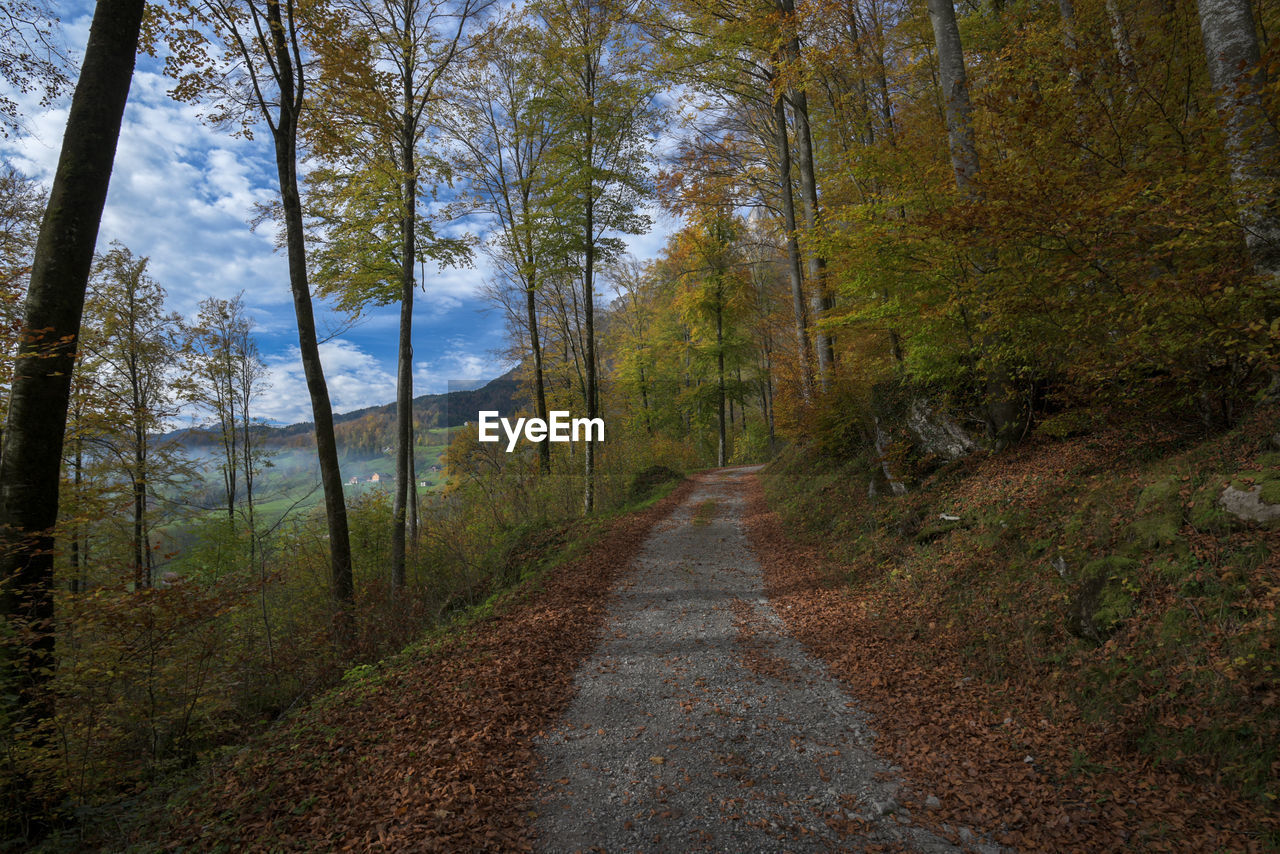 forest, tree, road, nature, the way forward, scenics, single lane road, woodland, outdoors, autumn, landscape, no people, pine tree, day, beauty in nature, sky, adventure, grass, wilderness area, winding road, mountain