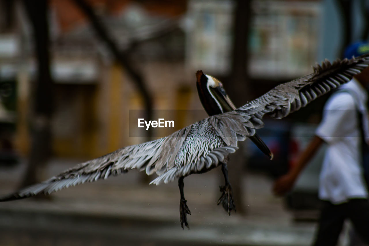 bird, vertebrate, animal wildlife, focus on foreground, animals in the wild, one animal, flying, spread wings, animal body part, day, people, architecture, men, outdoors, real people, animal wing