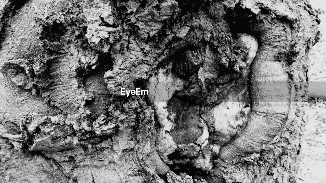 tree trunk, textured, rough, tree, growth, bark, no people, nature, full frame, day, outdoors, close-up, cave, fungus, beauty in nature