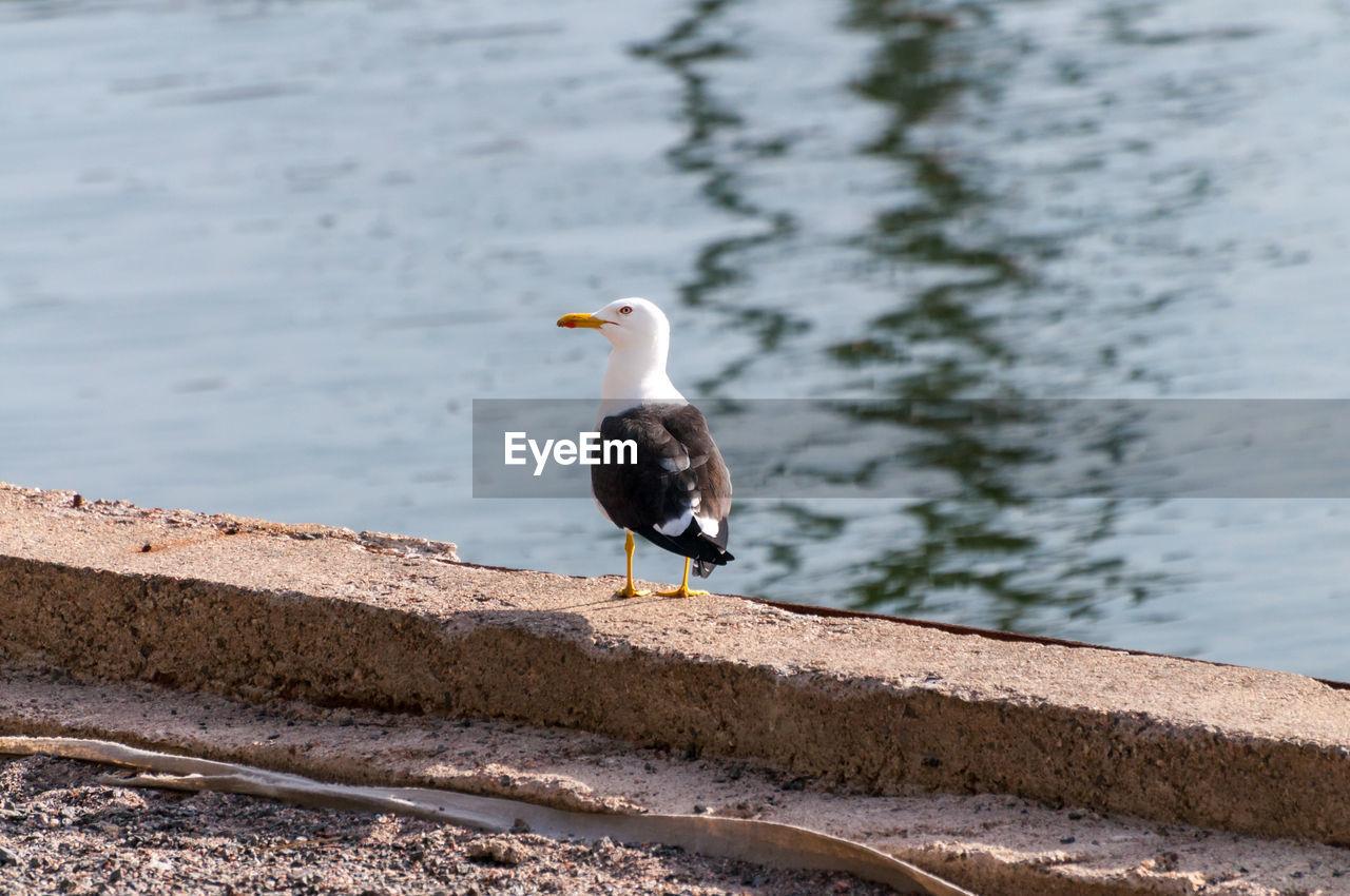 BIRD PERCHING ON RETAINING WALL BY LAKE