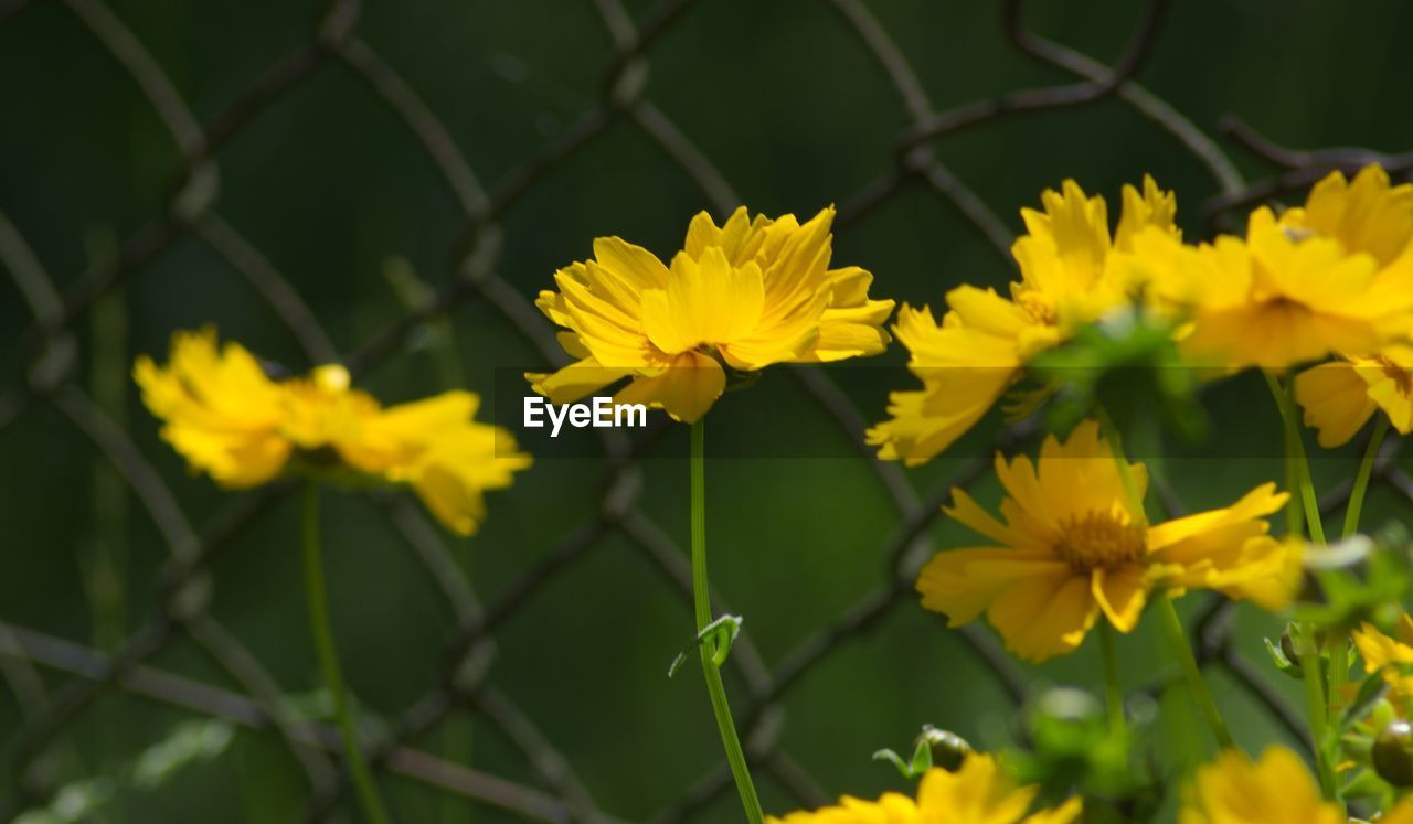 flower, yellow, growth, plant, nature, petal, fragility, beauty in nature, flower head, freshness, no people, day, outdoors, blooming, close-up