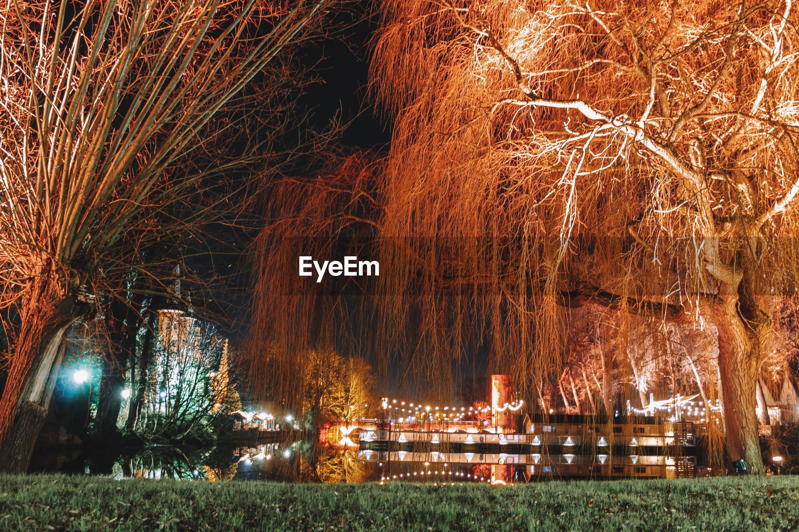 VIEW OF ILLUMINATED TREES AT PARK