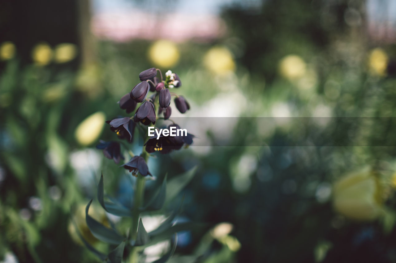 plant, growth, focus on foreground, close-up, beauty in nature, no people, flower, day, nature, freshness, vulnerability, flowering plant, fragility, selective focus, leaf, plant part, outdoors, green color, plant stem, tranquility
