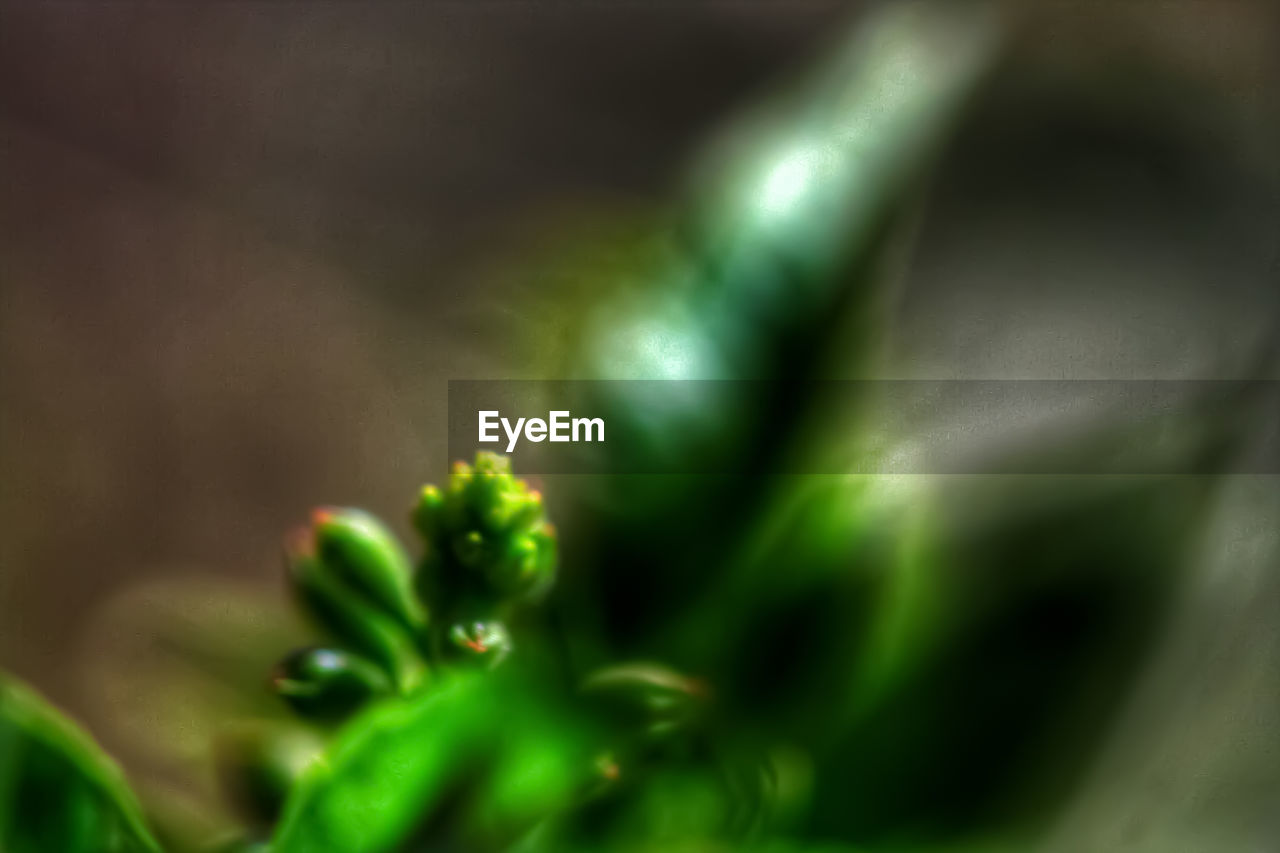 green color, growth, selective focus, close-up, no people, beauty in nature, plant, freshness, nature, day, vegetable, full frame, backgrounds, food and drink, indoors, leaf, plant part, pattern, beginnings