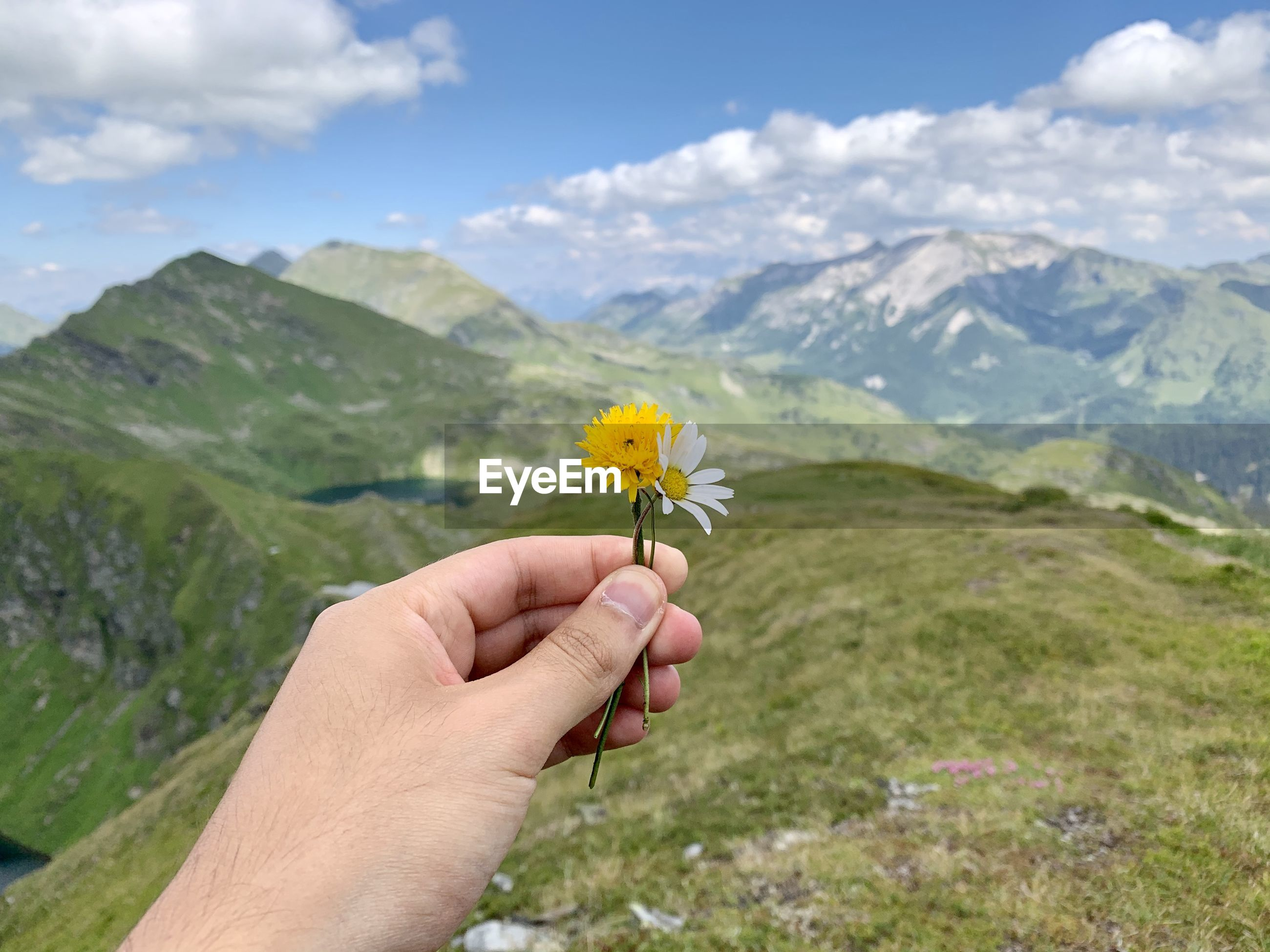 CROPPED HAND OF PERSON HOLDING YELLOW FLOWERING PLANT