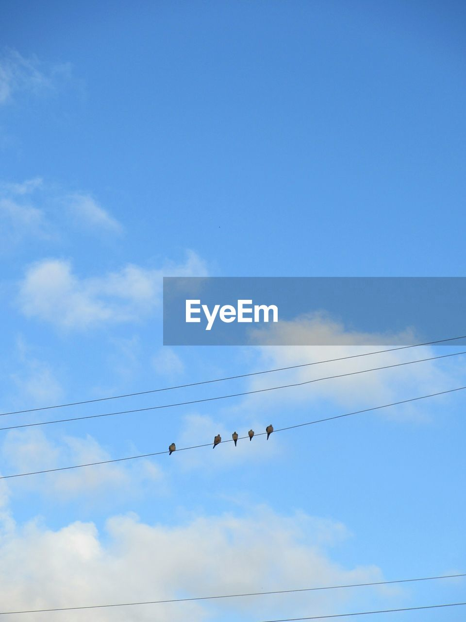 low angle view, cable, sky, cloud - sky, blue, bird, flying, animals in the wild, power line, animal themes, outdoors, day, flock of birds, nature, electricity, large group of animals, no people, beauty in nature, vapor trail, technology, telephone line