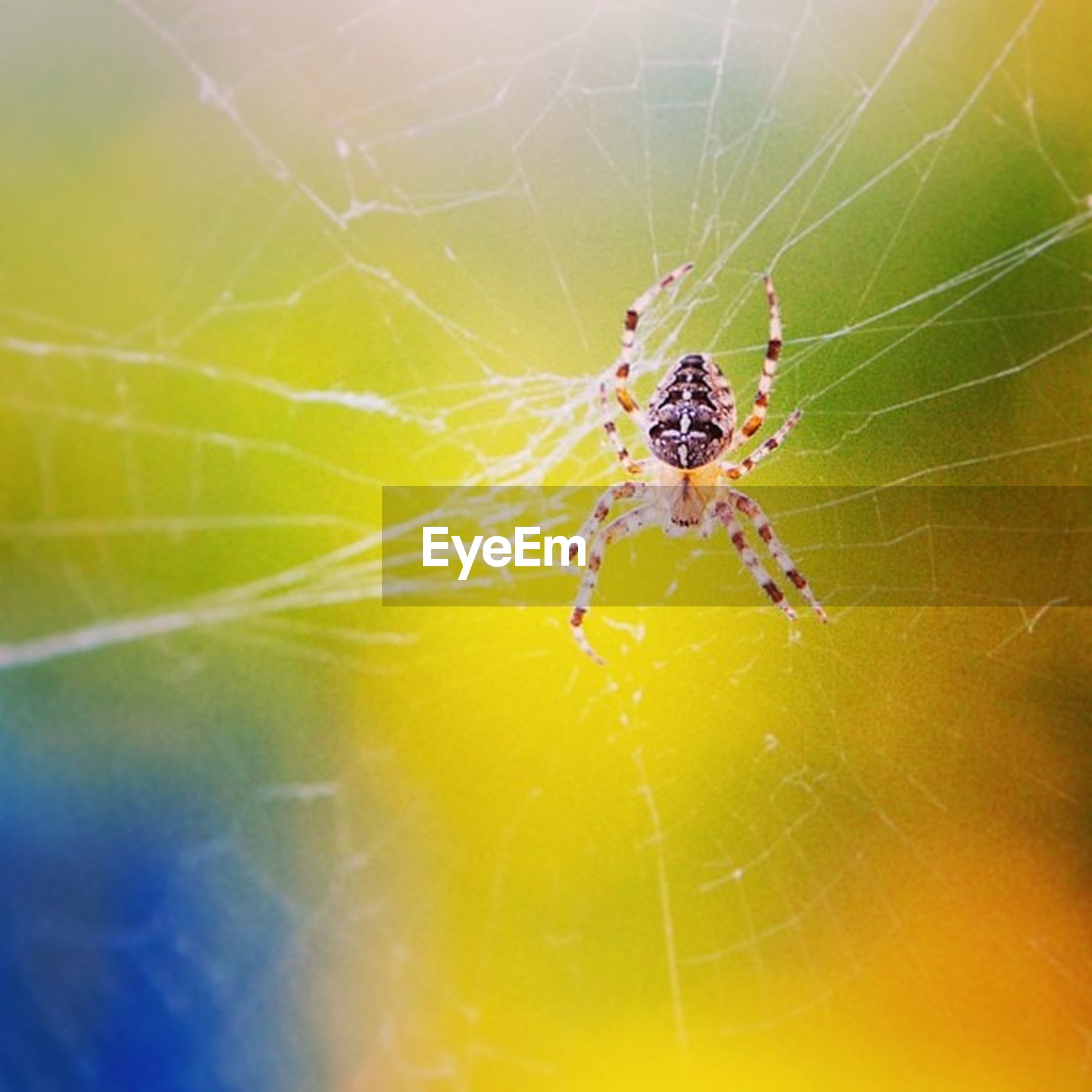 insect, animal themes, one animal, animals in the wild, spider, wildlife, spider web, close-up, focus on foreground, nature, arthropod, fragility, natural pattern, selective focus, outdoors, yellow, beauty in nature, no people, day