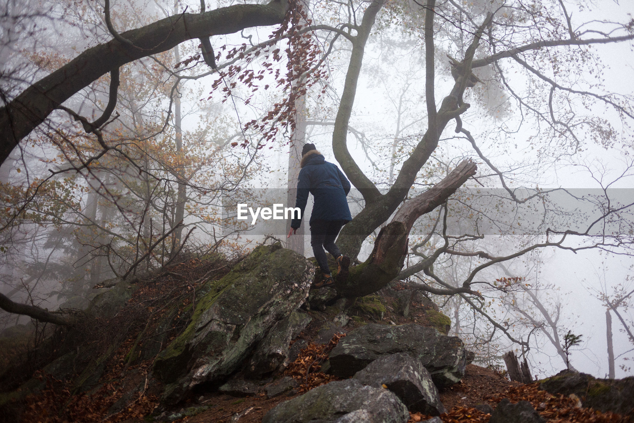 Rear view of woman standing on tree at forest during foggy weather