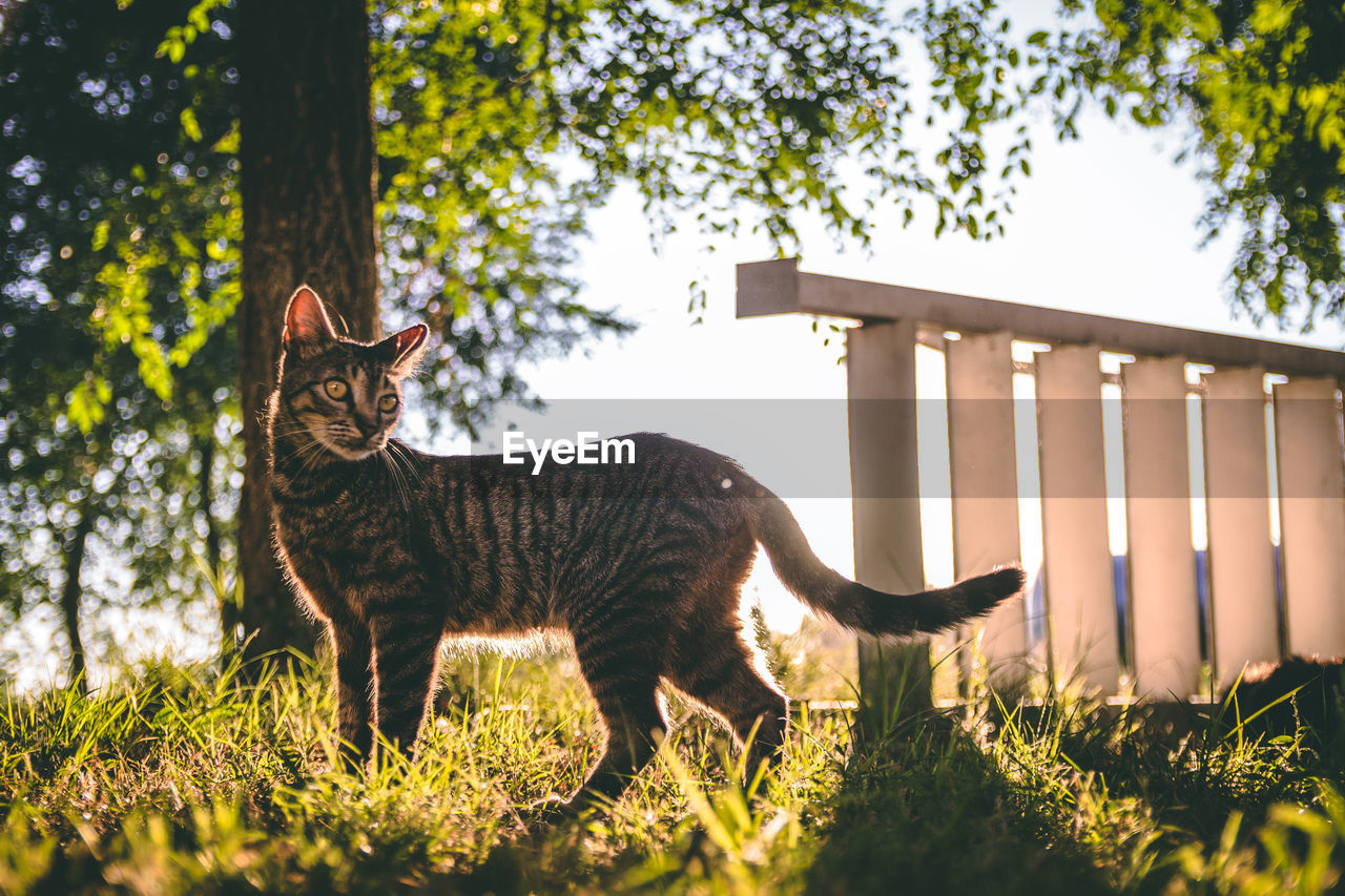 mammal, animal, animal themes, pets, domestic, domestic animals, one animal, plant, vertebrate, cat, nature, domestic cat, tree, land, feline, no people, standing, day, field, grass, outdoors, whisker
