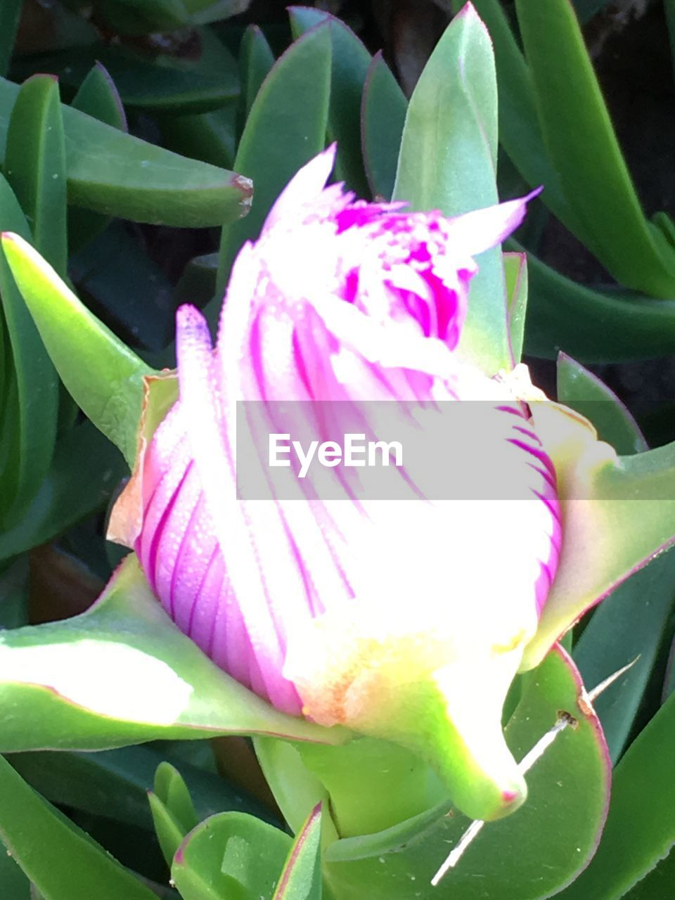 flower, growth, beauty in nature, plant, petal, nature, freshness, fragility, close-up, flower head, leaf, green color, outdoors, day, no people, blooming, pink color