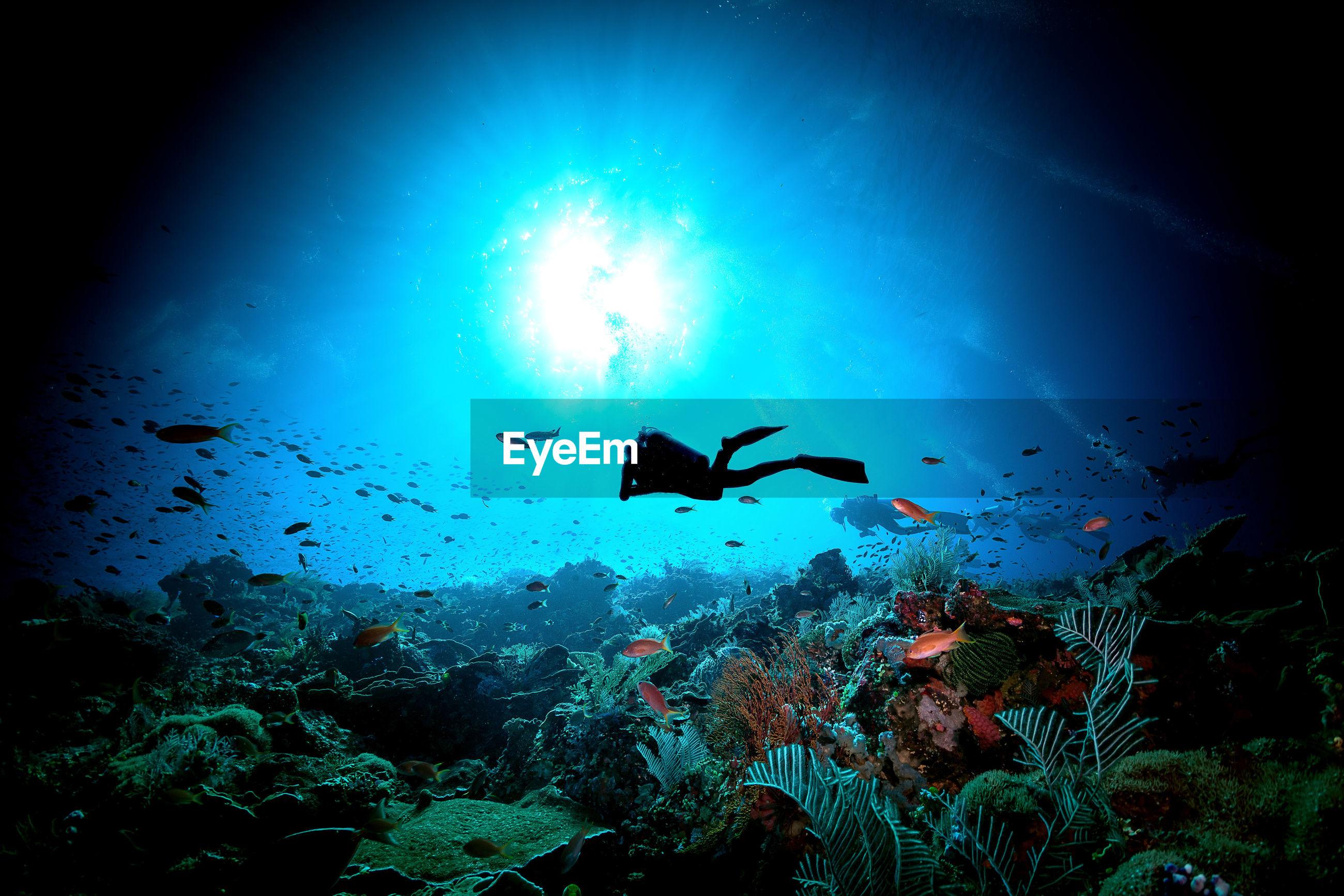 Woman scuba diving in sea