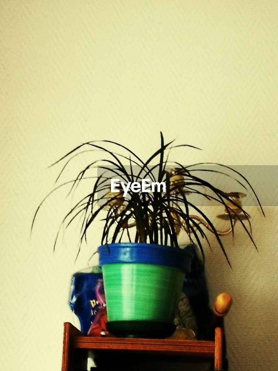 potted plant, no people, indoors, table, growth, plant, home interior, close-up, nature, day, freshness