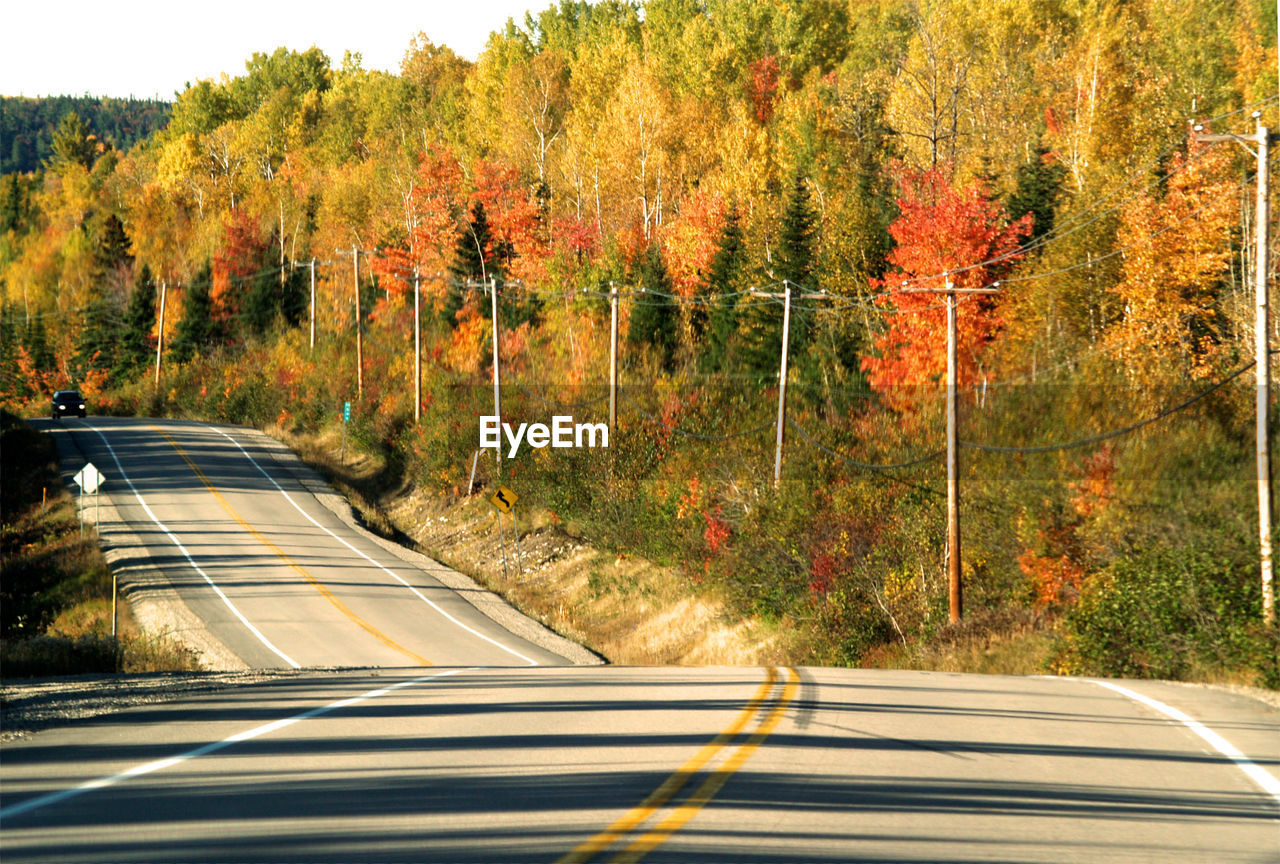 road, tree, autumn, road marking, transportation, nature, the way forward, no people, car, dividing line, outdoors, day, forest, leaf, landscape, yellow, winding road, scenics, beauty in nature, sky