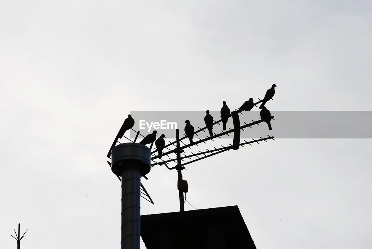 low angle view, communication, bird, animals in the wild, animal themes, guidance, perching, architecture, silhouette, direction, weather vane, day, antenna - aerial, animal wildlife, outdoors, technology, built structure, building exterior, no people, television aerial, nature, white stork, sky