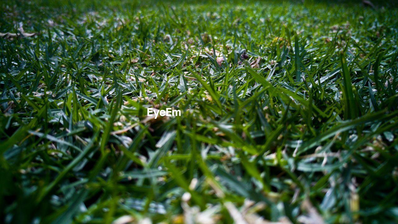 Close-up surface level of grassland