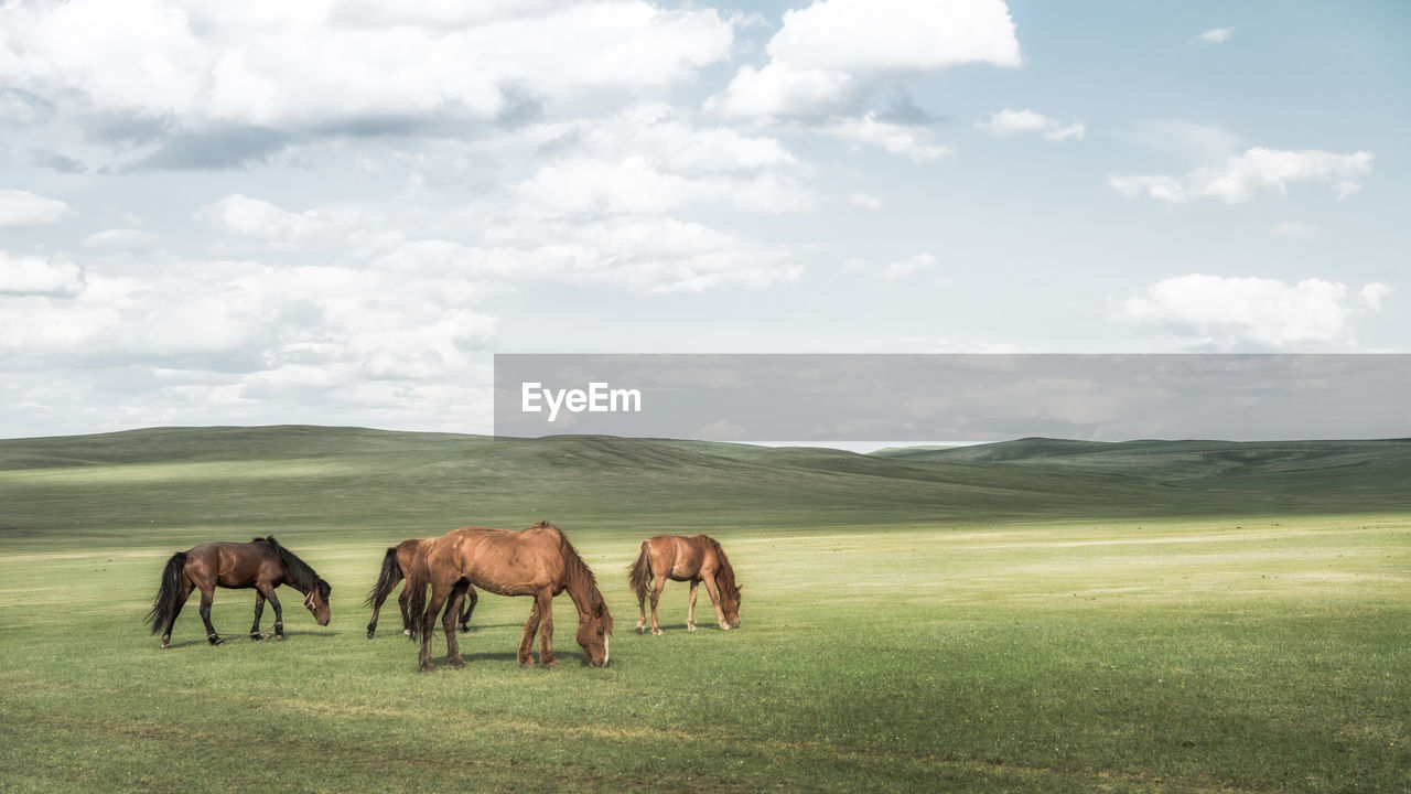Side View Of Horses Grazing On Grassy Field Against Sky