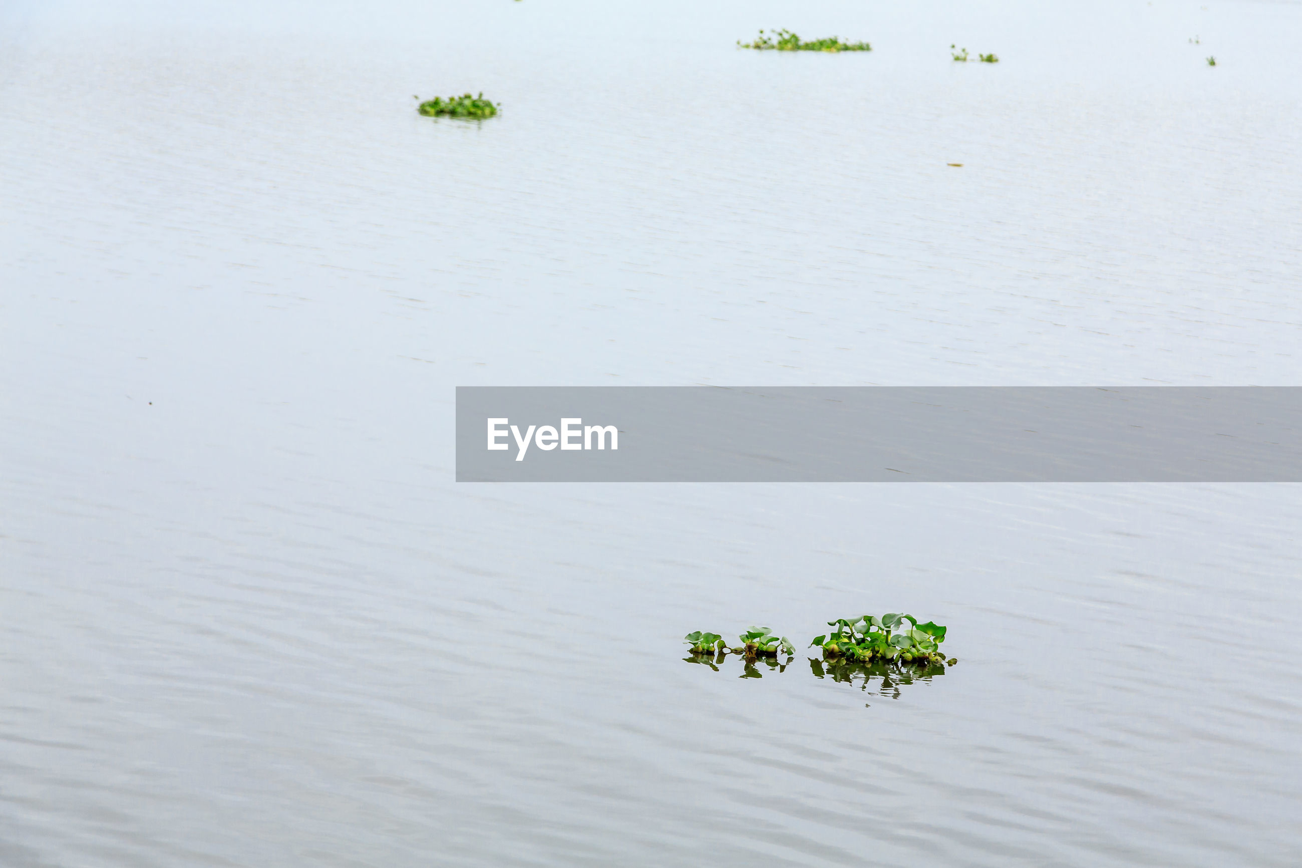 High angle view of plant floating on lake