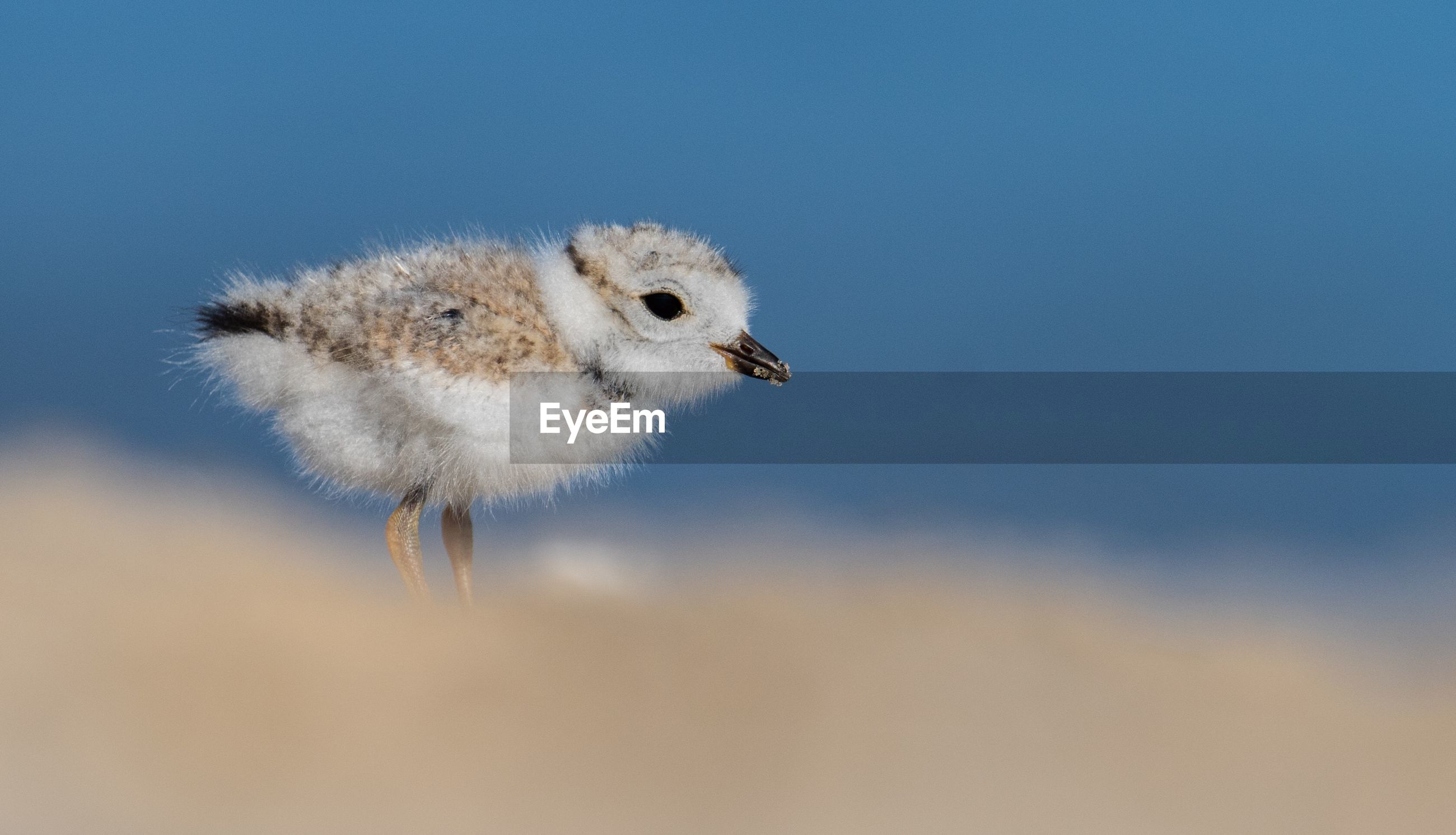 Close-up of young bird against sky