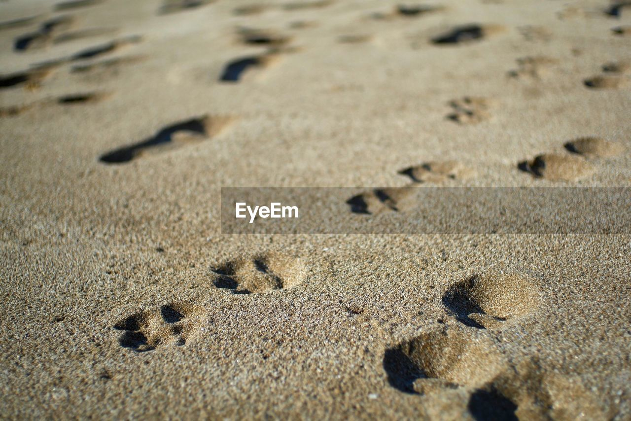sand, beach, land, no people, full frame, nature, day, backgrounds, footprint, high angle view, selective focus, pattern, close-up, paw print, outdoors, textured, sunlight, brown, print, animal track