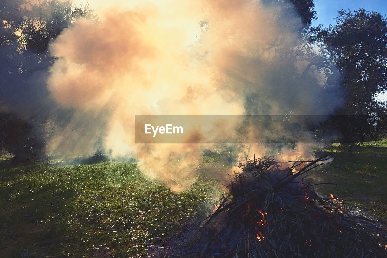 plant, tree, nature, land, smoke - physical structure, sky, burning, no people, fire, fire - natural phenomenon, environment, heat - temperature, day, forest, flame, cloud - sky, field, environmental issues, tranquility, outdoors, pollution, air pollution