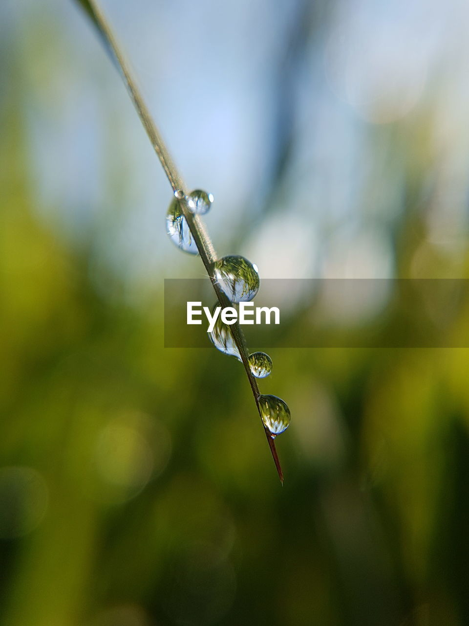 close-up, drop, plant, focus on foreground, growth, water, wet, no people, day, nature, fragility, beauty in nature, vulnerability, selective focus, green color, freshness, leaf, outdoors, plant part, purity, dew, raindrop, rainy season, blade of grass