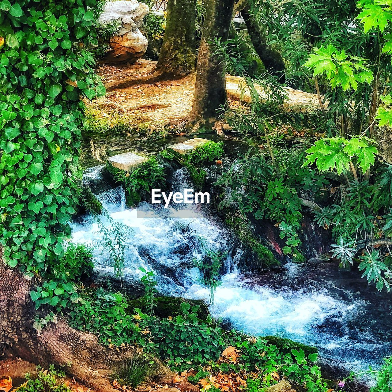 plant, tree, forest, water, beauty in nature, land, nature, flowing water, scenics - nature, growth, motion, no people, green color, day, tranquility, waterfall, long exposure, lush foliage, blurred motion, flowing, outdoors, rainforest, woodland, power in nature