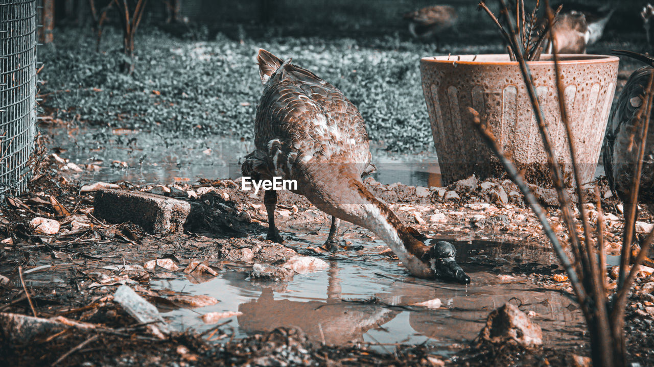 VIEW OF BIRDS DRINKING WATER