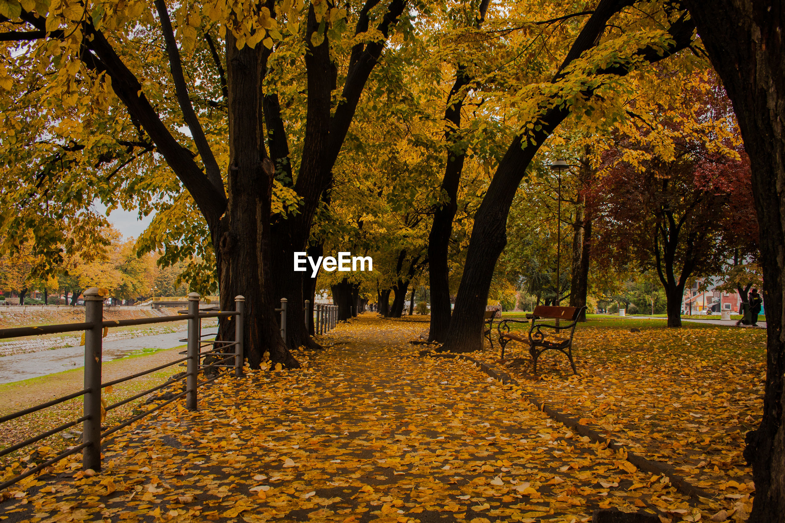 SCENIC VIEW OF AUTUMN TREES IN PARK
