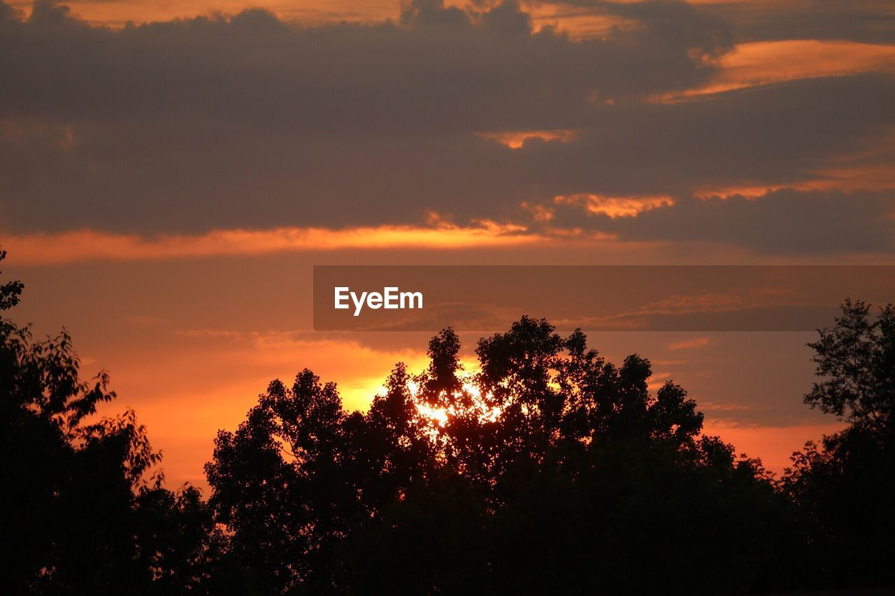 sunset, tree, silhouette, nature, beauty in nature, sky, tranquility, scenics, no people, growth, forest, tranquil scene, outdoors, landscape