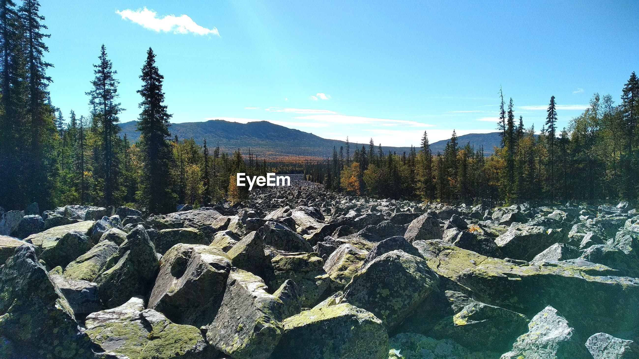PANORAMIC VIEW OF ROCKS AND TREES IN FOREST