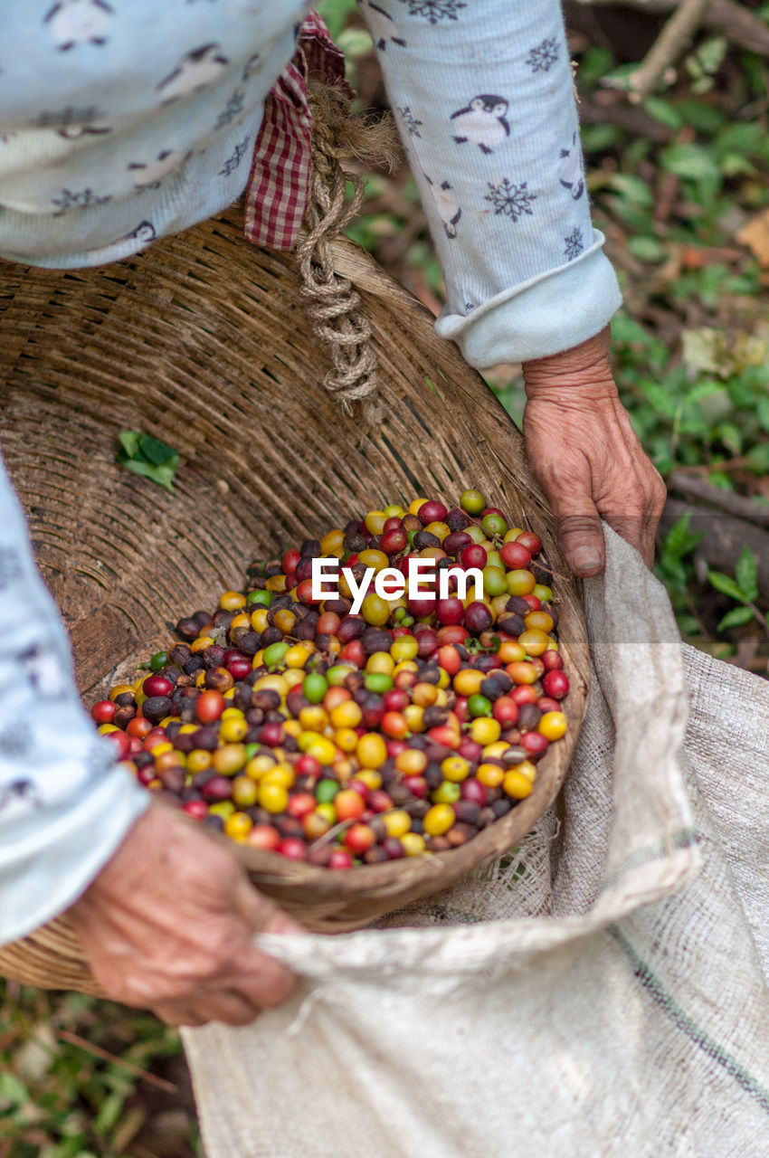 Cropped Image Of Farmer Putting Coffee Crops In Sack From Basket