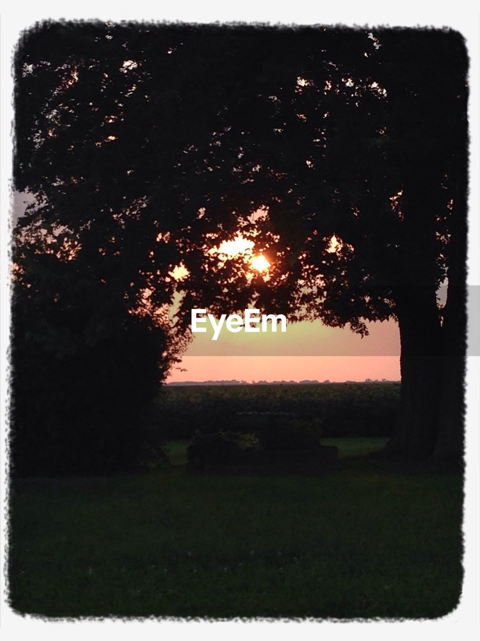 tree, no people, field, grass, outdoors, nature, landscape, sunset, tranquility, sky, day, beauty in nature