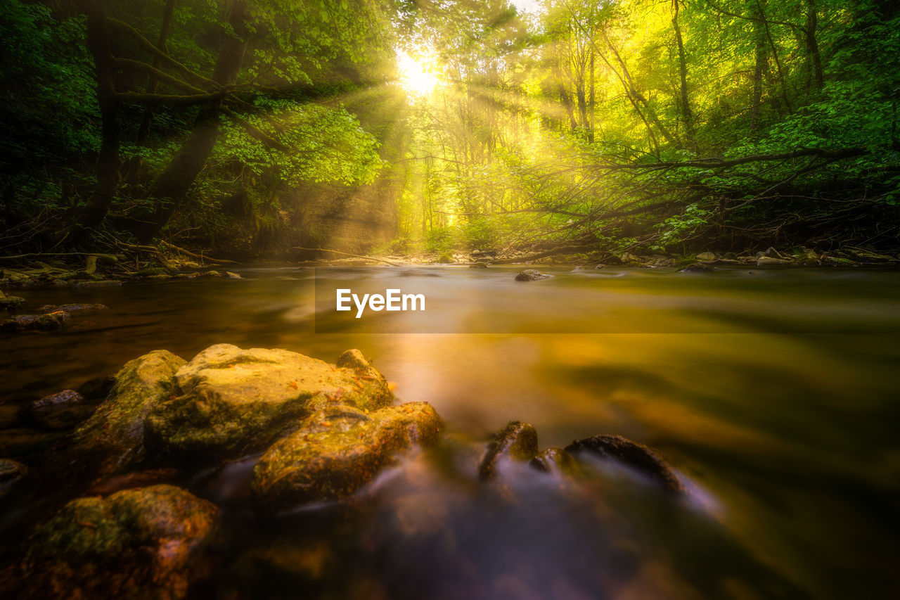 tree, plant, forest, beauty in nature, nature, day, tranquility, water, sunlight, no people, land, scenics - nature, tranquil scene, sunbeam, growth, outdoors, green color, river, sun, flowing water, surface level
