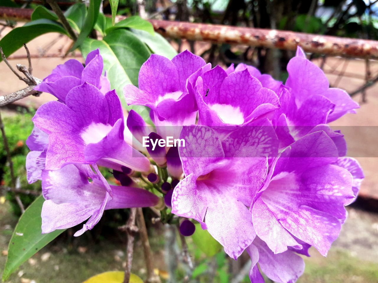 flower, nature, beauty in nature, growth, petal, fragility, freshness, plant, purple, outdoors, no people, day, close-up, blooming, flower head