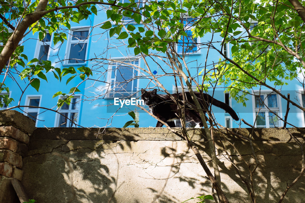 Portrait of a cat on wall against windows