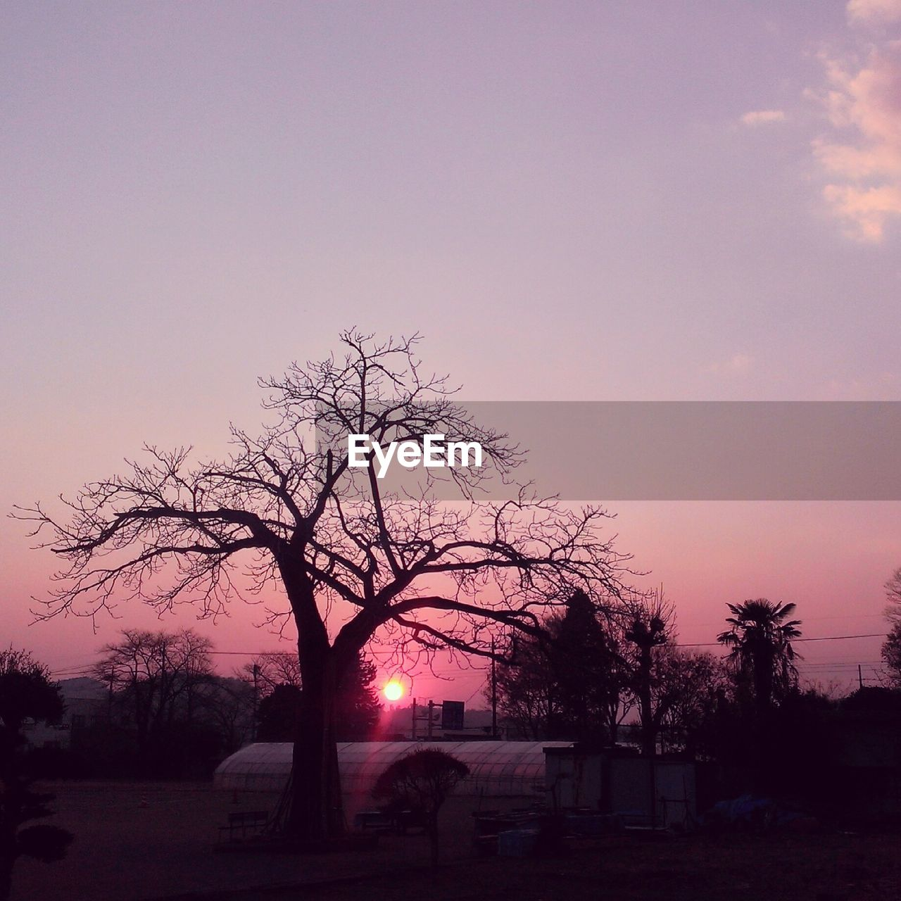 tree, sunset, bare tree, nature, tranquility, sky, silhouette, outdoors, no people, beauty in nature, clear sky, scenics, landscape, day