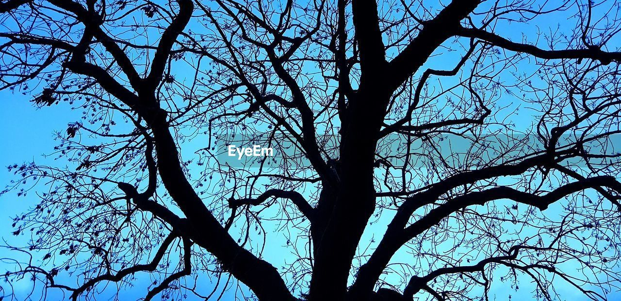 tree, branch, silhouette, bare tree, low angle view, sky, plant, no people, nature, tranquility, beauty in nature, trunk, tree trunk, outdoors, clear sky, backgrounds, day, scenics - nature, spooky, full frame, tree canopy