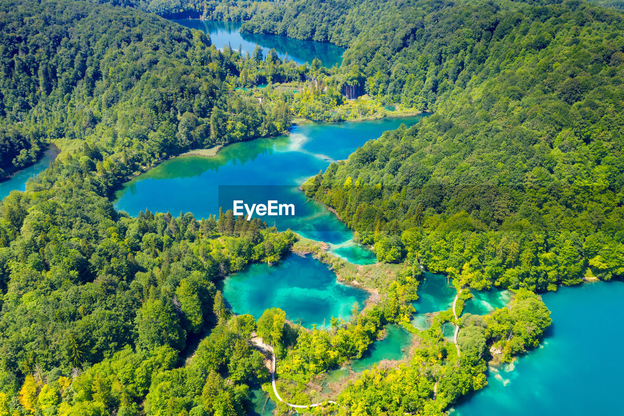 HIGH ANGLE VIEW OF TREES IN LAKE