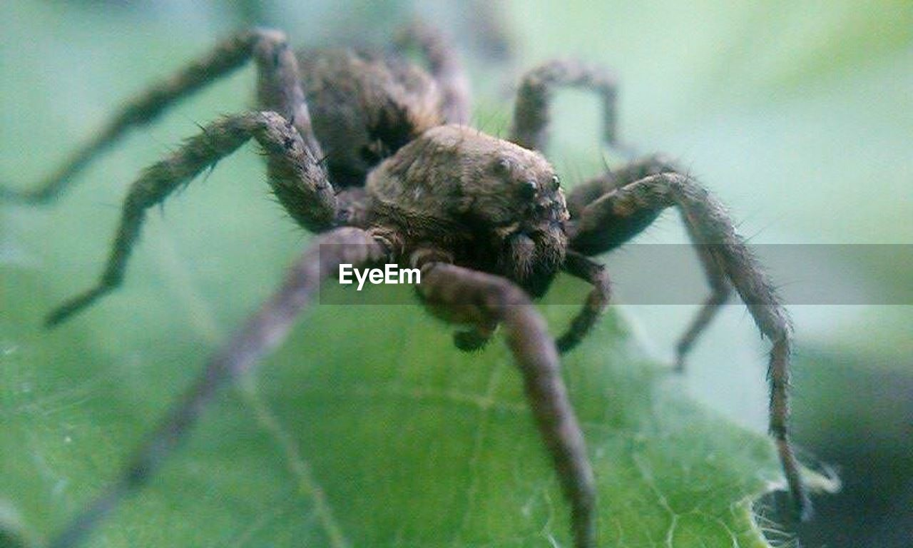spider, one animal, animals in the wild, animal themes, no people, close-up, animal wildlife, day, outdoors, nature