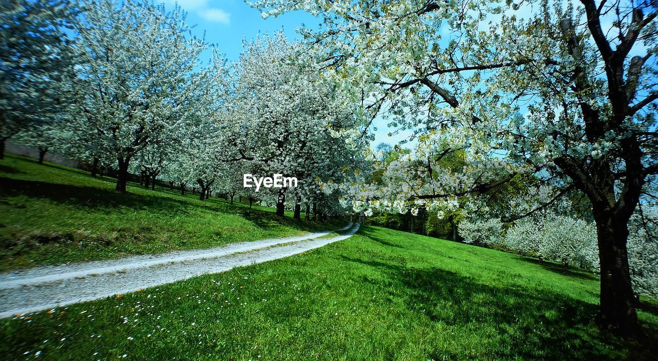tree, nature, beauty in nature, growth, grass, tranquility, scenics, tranquil scene, blossom, green color, day, flower, springtime, no people, branch, outdoors, spring, freshness, sky, landscape, fragility