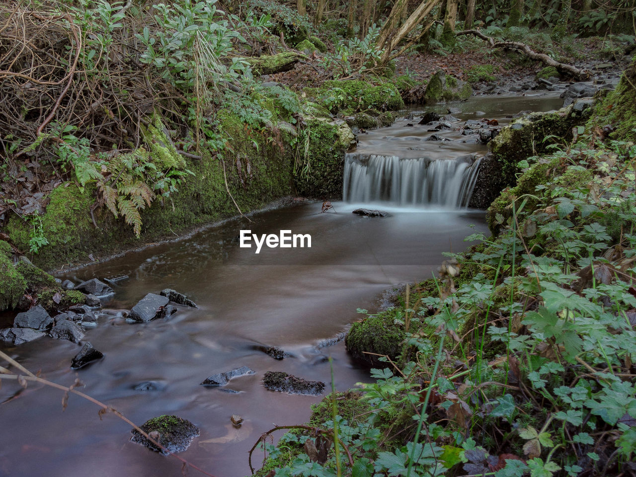 waterfall, motion, nature, long exposure, water, high angle view, beauty in nature, forest, plant, scenics, no people, growth, outdoors, day, tree